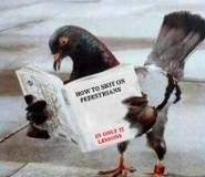 Pigeon Shit on Pedestrians