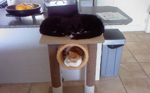Achilles Olympus Coco Duke it out on Scratching Post2