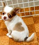 Puppy Heart