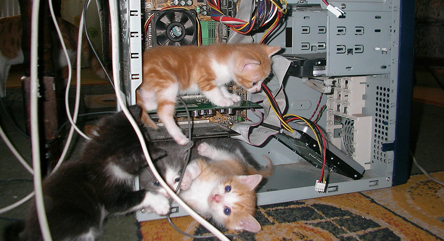 kittens trying to fix a computer