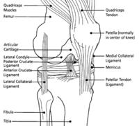 Knee_Diagram3