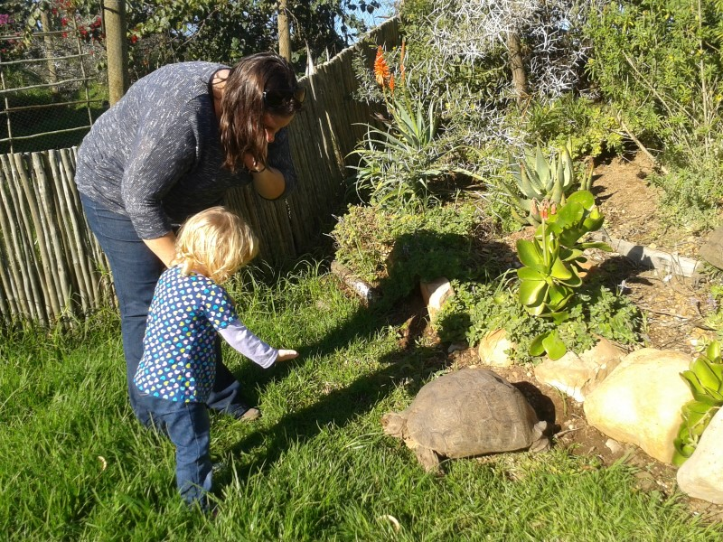 jessica and chantelle lotter confront a tortoise at butterfly world