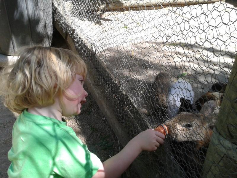 jessica feeds rabbits at helderberg farm