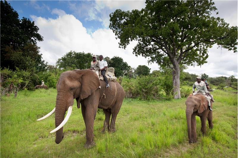the royal livingstone hotel safari option 1