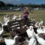 IMG_20150307_113438 - little girl feeding ducks jessica lotter