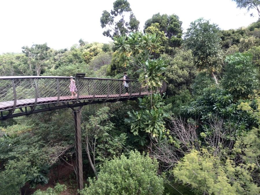 Kirstenbosch Centenary Tree Canopy Walkway boomslang bridge south africa cape town 2