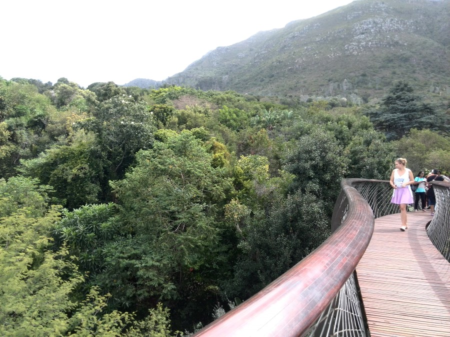 Kirstenbosch Centenary Tree Canopy Walkway boomslang bridge south africa cape town 3