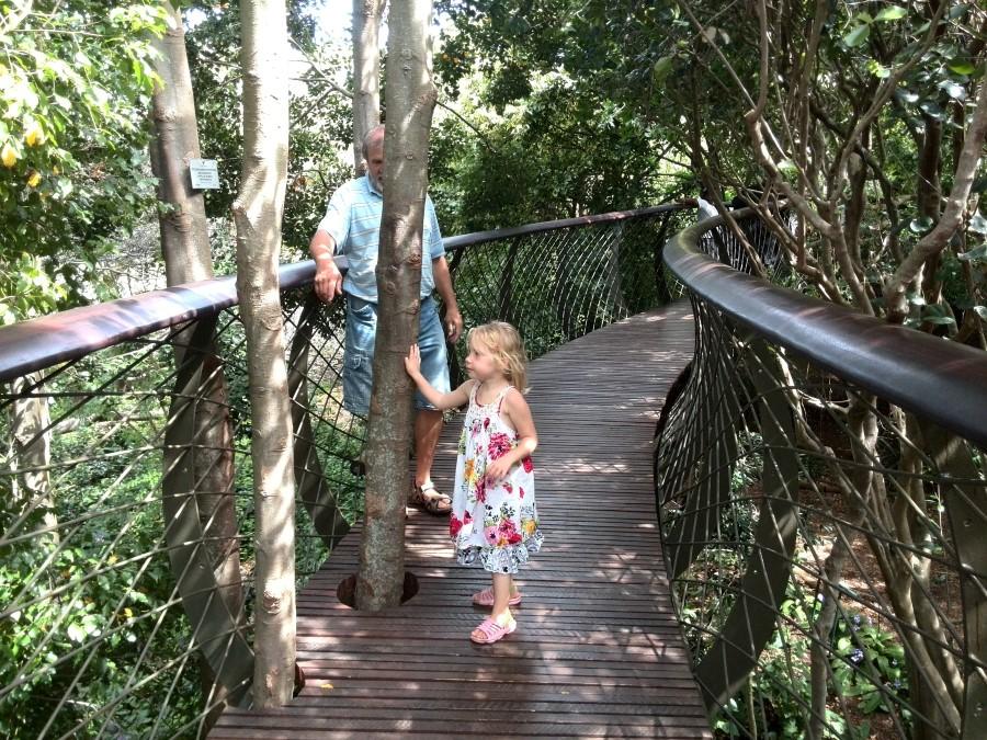 Kirstenbosch Centenary Tree Canopy Walkway boomslang bridge south africa cape town 4