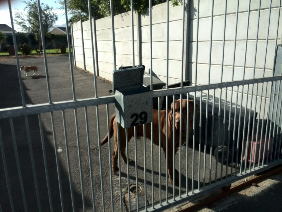 our black bin lounging behind the gate of 29 whittle street - guarded by a dog