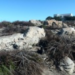 IMG_20150627_130231 penguins at the stony point penguin colony in betty's bay