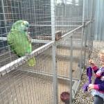 IMG_20150708_115349 green bird at birds paradise exotic bird breeder in robertson