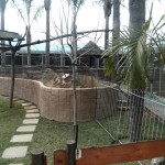 IMG_20150708_115943 meerkat at birds paradise exotic bird breeder in robertson