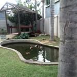 IMG_20150708_121536 duck pond at birds paradise exotic bird breeder in robertson