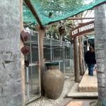 IMG_20150708_122253 at birds paradise exotic bird breeder in robertson