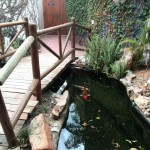 IMG_20150708_122942 koi pond at birds paradise exotic bird breeder in robertson