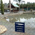 IMG_20150708_123345 crocodile pit at birds paradise exotic bird breeder in robertson