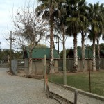 IMG_20150708_124315 at birds paradise exotic bird breeder in robertson