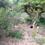 IMG_20150708_143231 montagu nature garden