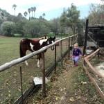 IMG_20150709_102124 horses at rainbow glen accommodation in montagu