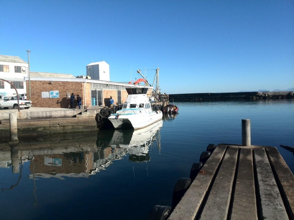IMG_20150715_094335 gansbaai harbour ivanhoe sea safaris