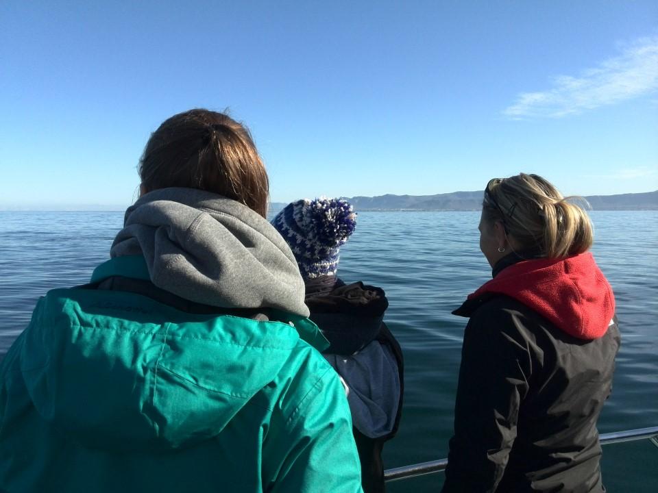 IMG_20150715_110910 Whale watching in Gansbaai with Ivanhoe Sea Safaris