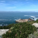 IMG_20150802_135345 scenic hermanus cliff path
