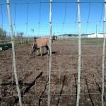 IMG_20150808_115456 eland at the giraffe house wildlife awareness centre