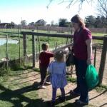 IMG_20150808_121837 feeding goats at the giraffe house wildlife awareness centre