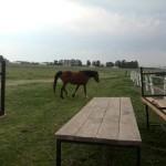 IMG_20150823_152327 horse at wild clover farm restaurant