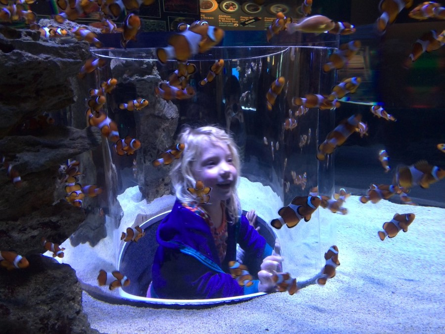 IMG_20150829_141907 jessica and the clown fish at the waterfront two oceans aquarium