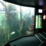 IMG_20150829_150411 fish tank at the waterfront two oceans aquarium