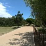 IMG_20151114_125124 indigenous trees at vink's arboretum in durbanville