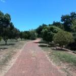 IMG_20151114_125626 indigenous trees at vink's arboretum in durbanville