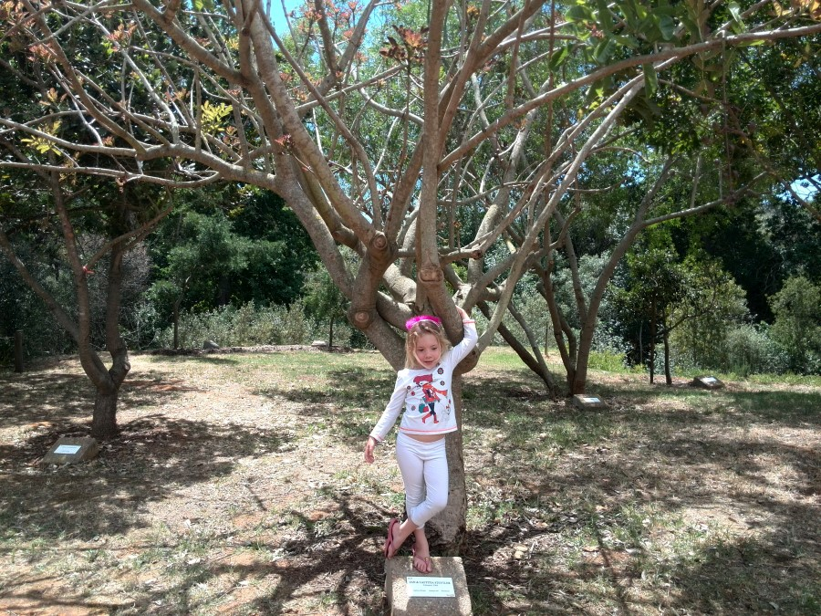 IMG_20151114_125935 jessica lotter with a sausage tree at vink's arboretum in durbanville