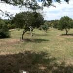IMG_20151114_130348 indigenous trees at vink's arboretum in durbanville