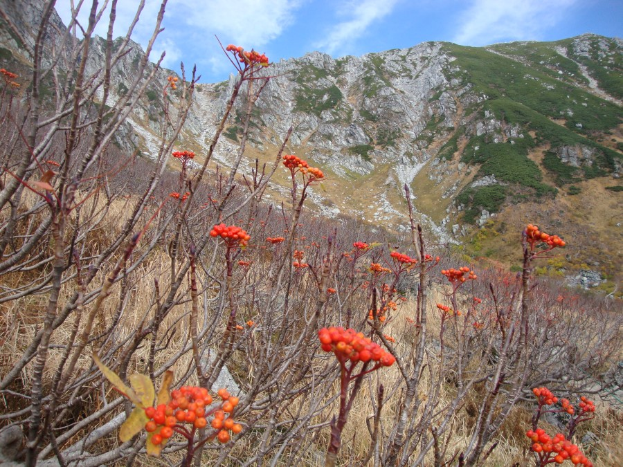 DSC07909 vegetation on mount komagatake of the chuo alps, komagane, japan