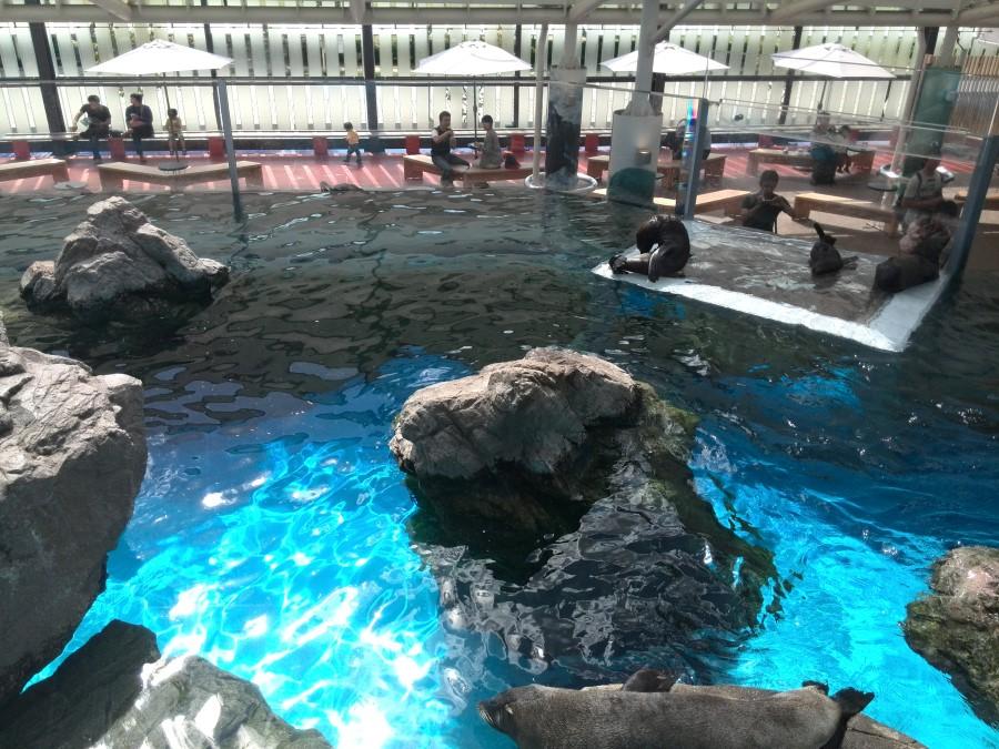 IMG_20141007_111700 seals at the kyoto aquarium in kyoto, japan