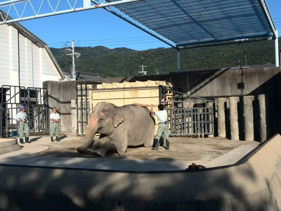 IMG_20141007_154642 elephant getting a wash at kyoto municipal zoo, kyoto, japan