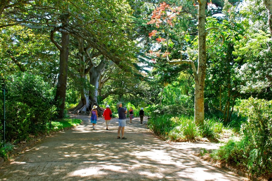 Things to See in South Africa: The Arderne Gardens in Cape ...