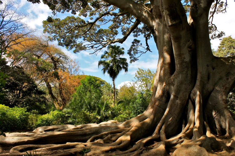 arderne gardens with its champion trees in claremont, cape town, south africa 2
