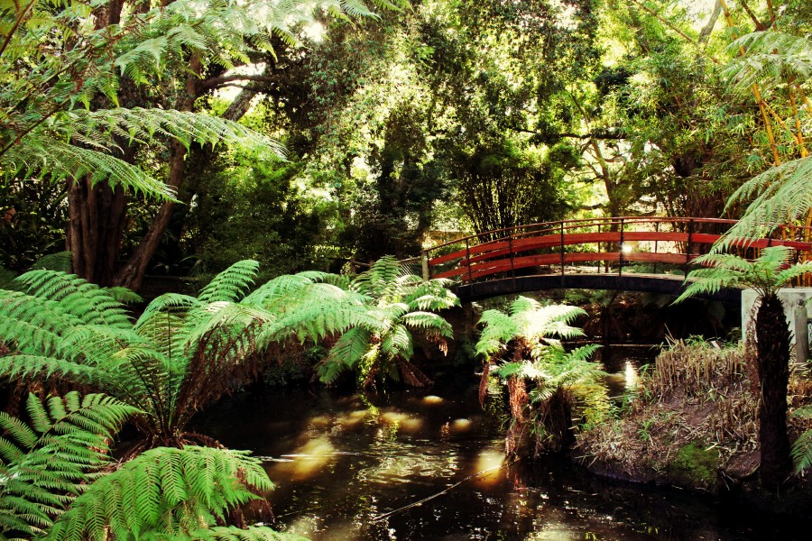 arderne gardens with its champion trees in claremont, cape town, south africa 4