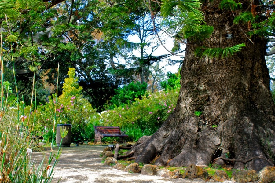 arderne gardens with its champion trees in claremont, cape town, south africa 5