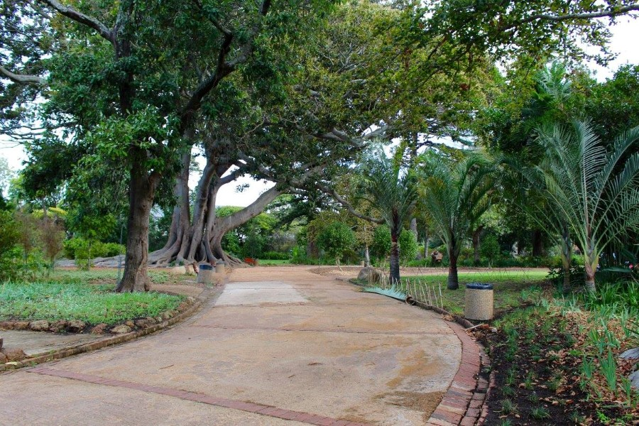arderne gardens with its champion trees in claremont, cape town, south africa 7