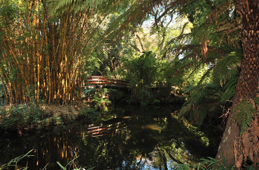 arderne gardens with its champion trees in claremont, cape town, south africa 8