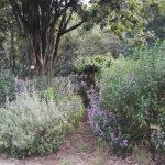 IMG_20160412_144252 lush plants in the KwaZulu-Natal National Botanical Garden
