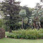 IMG_20160412_144436 lush plants in the KwaZulu-Natal National Botanical Garden