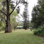 IMG_20160412_145020 big trees in the KwaZulu-Natal National Botanical Garden