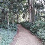 IMG_20160412_145031 tree-lined walkway in the KwaZulu-Natal National Botanical Garden