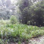 IMG_20160412_145054 lush plants in the KwaZulu-Natal National Botanical Garden