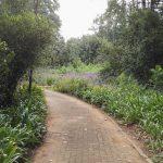 IMG_20160412_145114 tree-lined walkway in the KwaZulu-Natal National Botanical Garden